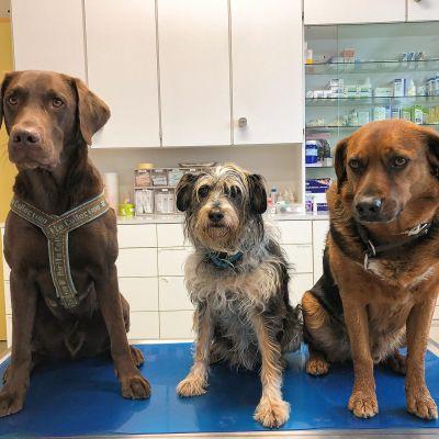 Unsere Praxishunde